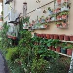 Kebun tepi rumah bawa keceriaan